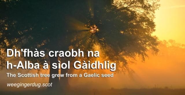 gaelicseed